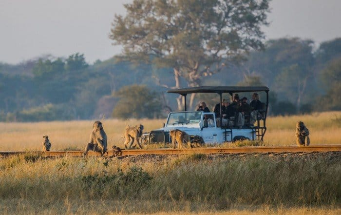 Zimbabwe Safari - Imvelo Safari Lodges - Lina Stock