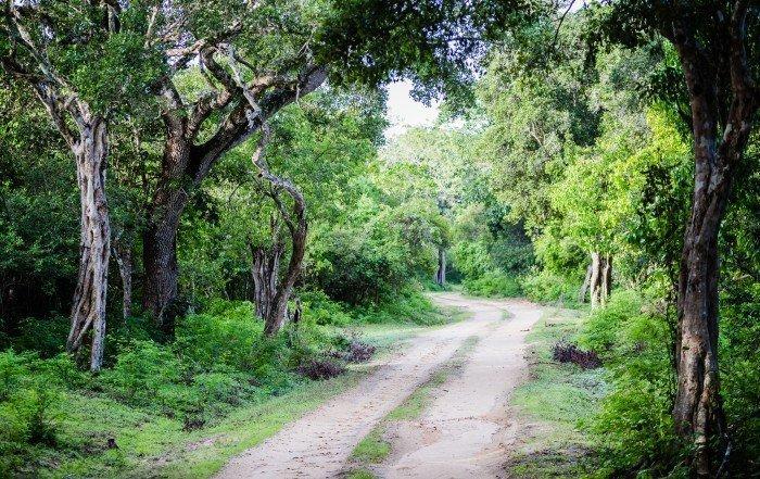 Kumana National Park - Sri Lanka
