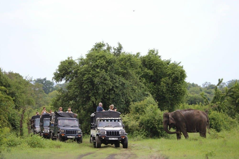 Kaudulla National Park: Best Place to See Elephants in Sri Lanka