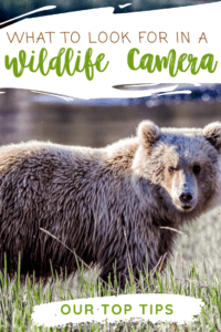 The Best Camera for Wildlife Photography