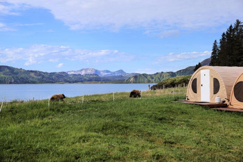 Alaska Camping And Bear Viewing A World's Top 100 Travel Adventure