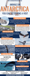 Animals in Antarctica You Can See During a Visit