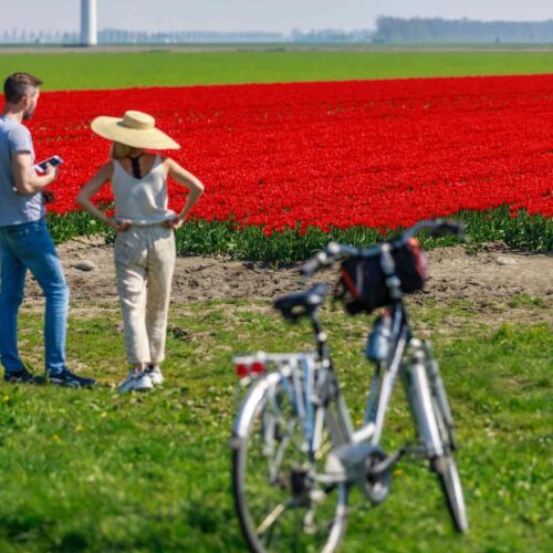 Best Day Trips from Amsterdam (That Are Worth the Trip!)