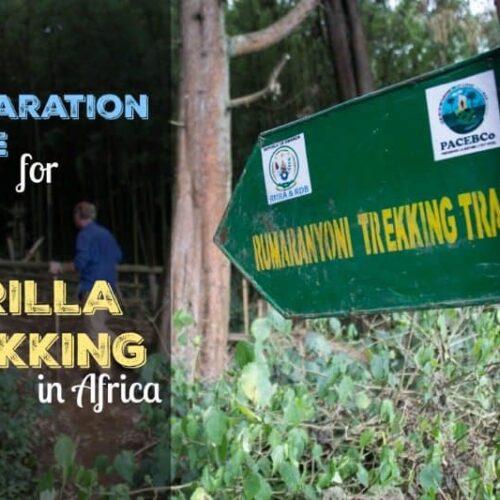 Gorilla Trekking Preparation Guide