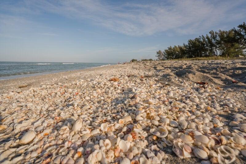 Shelling Beach on Sanibel Island, Florida