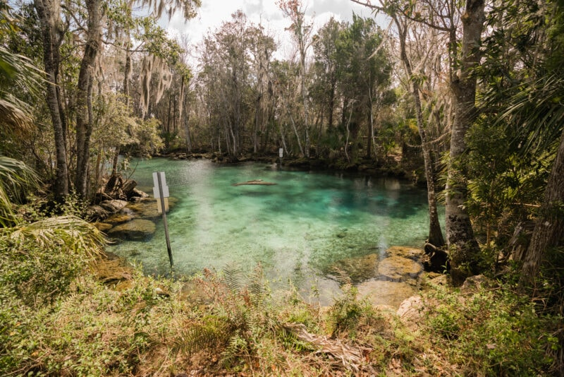Three Sister Springs, Crystal River, Florida
